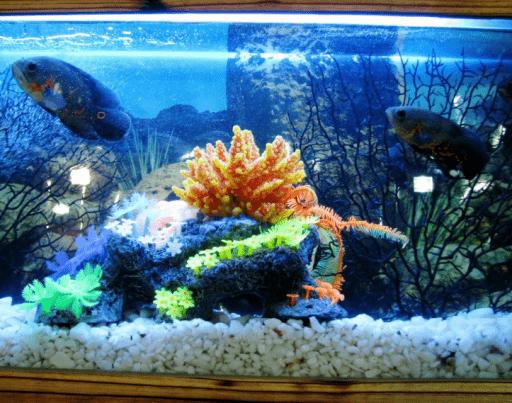 Tiras LED para acuarios